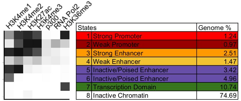 Chromatin segmentation allows discovery of cis-regulatory elements